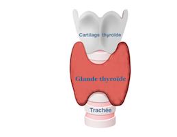Hypothyroidie